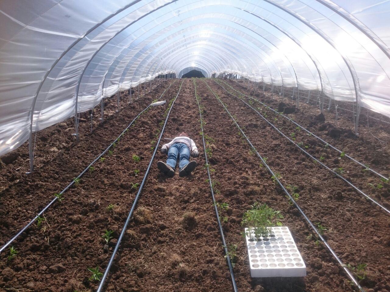 questo si che è un letto di semina
