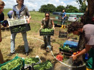 Raccolta collettiva e report di Crocevia su cibo e GDO @ CSA