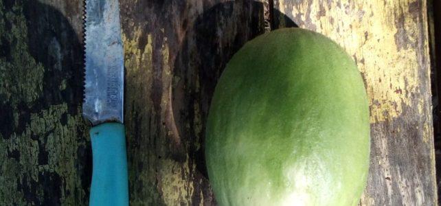 lo Scattone il melone che sa di cetriolo