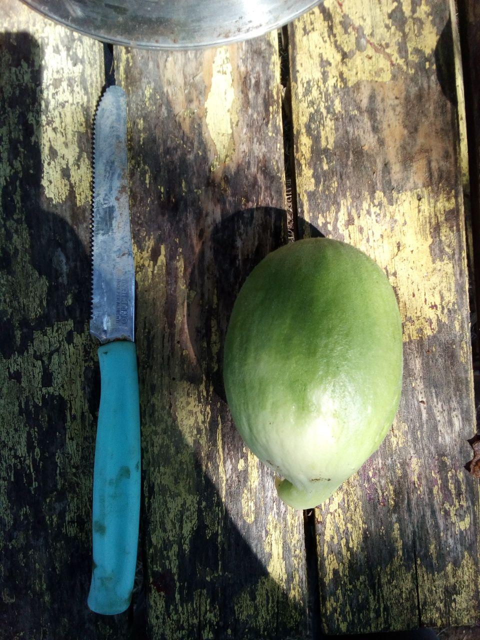 lo Scattone, il melone che sa di cetriolo
