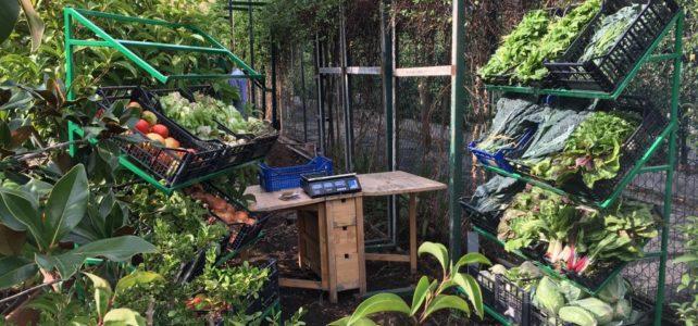 Monteverde: incontro e comunità