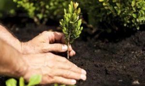 Piantiamo gli alberi! Giornata di lavoro collettivo su campi @ CSA