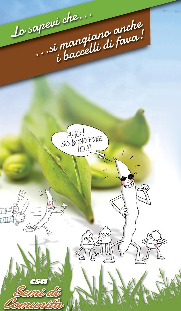 Lo sapevi che… si mangiano anche i baccelli delle fave!