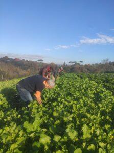 Trapianto di piantine da plateau a terra e semina @ Campi CSA