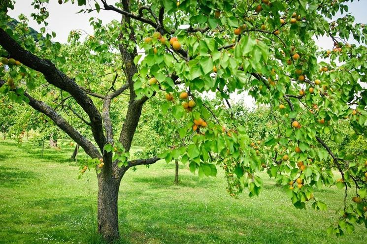 Alberi da frutta. Un nuovo inizio