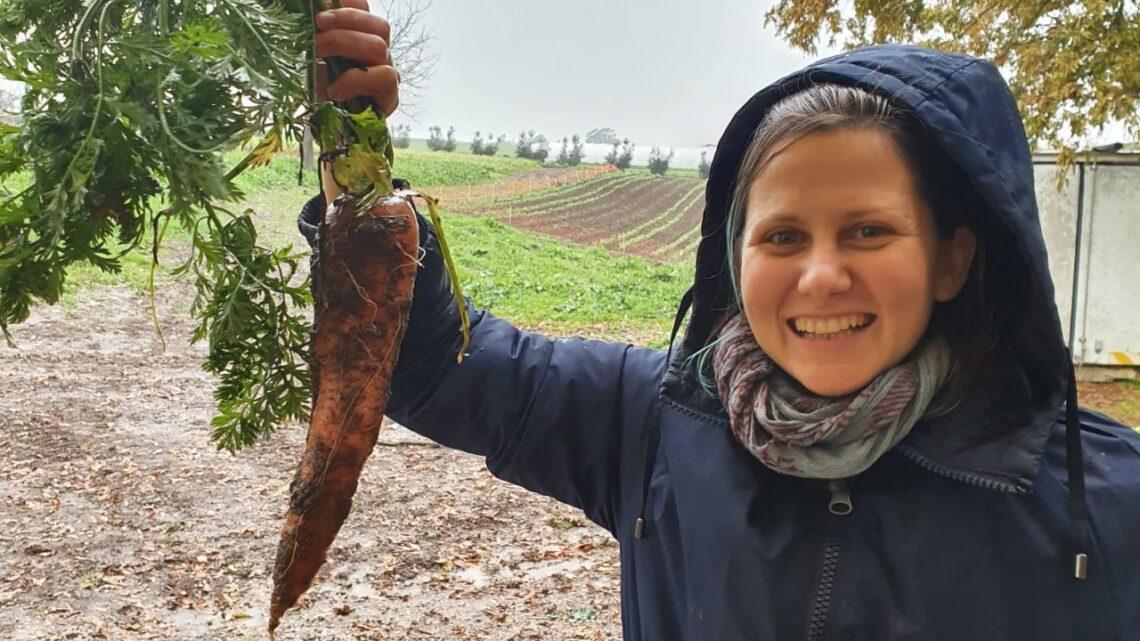 Insalata di carote e prezzemolo tunisina