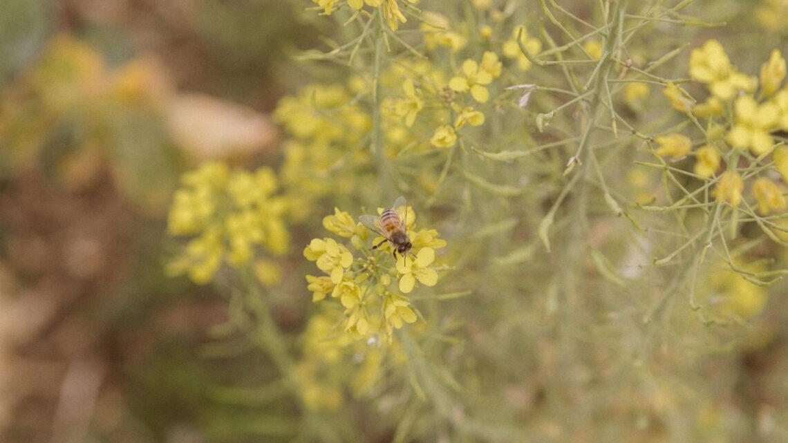 22 Maggio Giornata Mondiale della Biodiversità